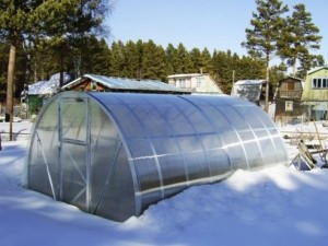 Зимнее выращивание овощей