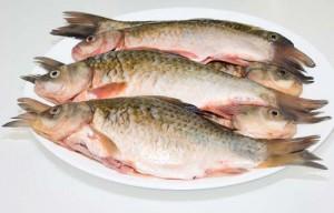 «Рыбный день»: как это было?